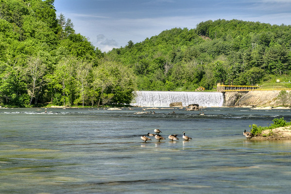 Geese swim in the New River near the dam in Fries, VA on Friday, May 31, 2013. Copyright 2013 Jason Barnette