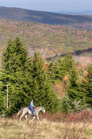 A lone horseback rider on the Virginia Highlands Horse Trail at Grayson Highlands State Park in Mouth of Wilson, VA on Tuesday, October 15, 2013. Copyright 2013 Jason Barnette  The Virginia Highlands Horse Trail is a 52-mile trail primarily for horseback riders, although hikers will use the trail as well. The trail winds through Grayson Highlands State Park and throughout the Mount Rogers National Recreation Area.