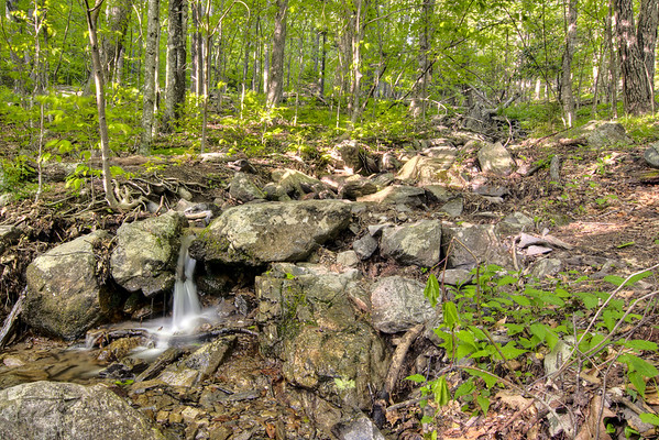 A tiny waterfall along the Cabin Creek Trail at Grayson Highlands State Park in Mouth of Wilson, VA on Friday, May 31, 2013. Copyright 2013 Jason Barnette