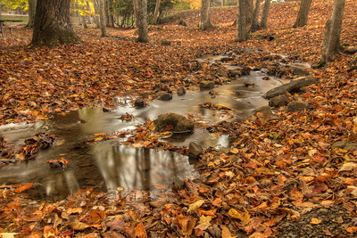 Hundreds of fallen leaves surround a small creek at Hungry Mother State Park in Marion, VA on Sunday, October 19, 2014. Copyright 2014 Jason Barnette