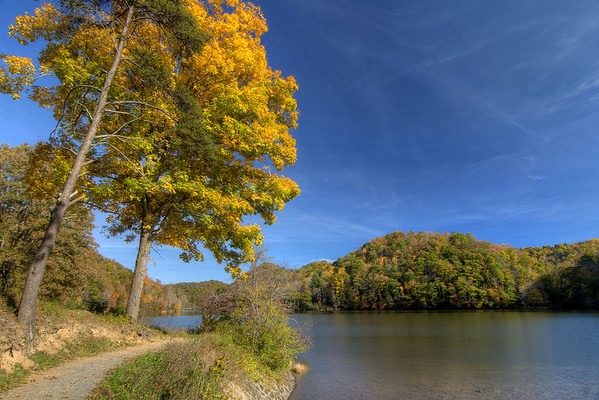 A brilliant yellow tree adorns the Lake Side Trail at Hungry Mother State Park in Marion, VA on Sunday, October 19, 2014. Copyright 2014 Jason Barnette