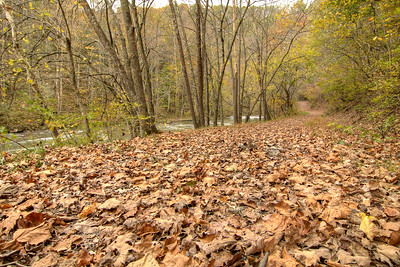 Freshly fallen leaves cover the ground along the Big Cedar Creek Trail at the Pinnacle Natural Area Preserve in Lebanon, VA on Tuesday, October 21, 2014. Copyright 2014 Jason Barnette