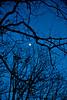 Blue evening - 2016-03-18