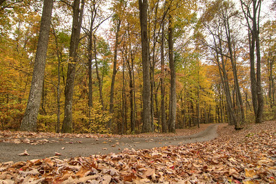 Leaves cover the ground at the campground at Flag Rock Recreation Area in Norton, VA on Saturday, October 25, 2014. Copyright 2014 Jason Barnette