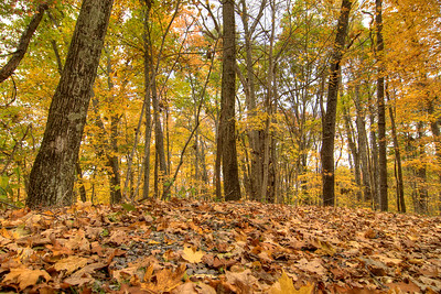 Leaves cover the ground underneath brilliant trees in Norton, VA on Saturday, October 25, 2014. Copyright 2014 Jason Barnette
