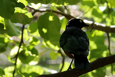 A bird at the Mill Mountain Zoo at Mill Mountain Park in Roanoke, VA on Friday, July 4, 2014. Copyright 2014 Jason Barnette