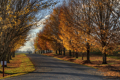Lingering fall colors cling to trees lining the entrance to Rural Retreat Lake in Rural Retreat, VA on Thursday, October 23, 2014. Copyright 2014 Jason Barnette