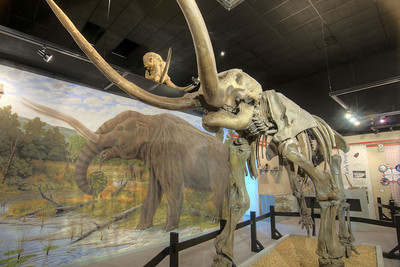 A replica of a mastodon at the Museum of the Middle Appalachians in Saltville, VA on Tuesday, June 4, 2013. Copyright 2013 Jason Barnette