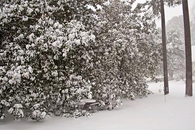 Snow in Richmond! January/February 2010