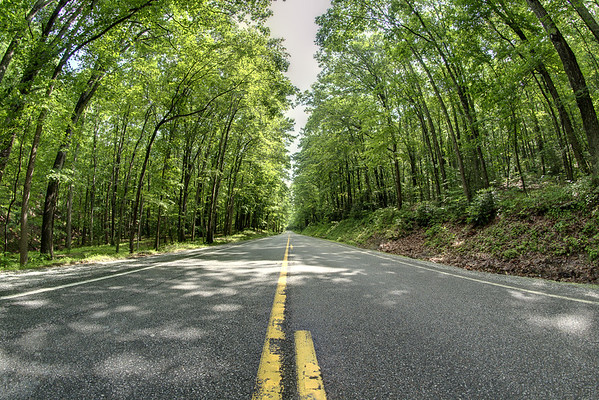A long stretch of Highway 16, partially shrouded in a green tunnel of trees, and beautifully peaceful near Sugar Grove, VA on Friday, June 13, 2014. Copyright 2014 Jason Barnette