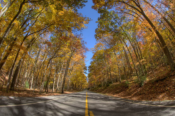 A canopy of brilliant trees covers Highway 16 near Sugar Grove, VA on Sunday, October 19, 2014. Copyright 2014 Jason Barnette