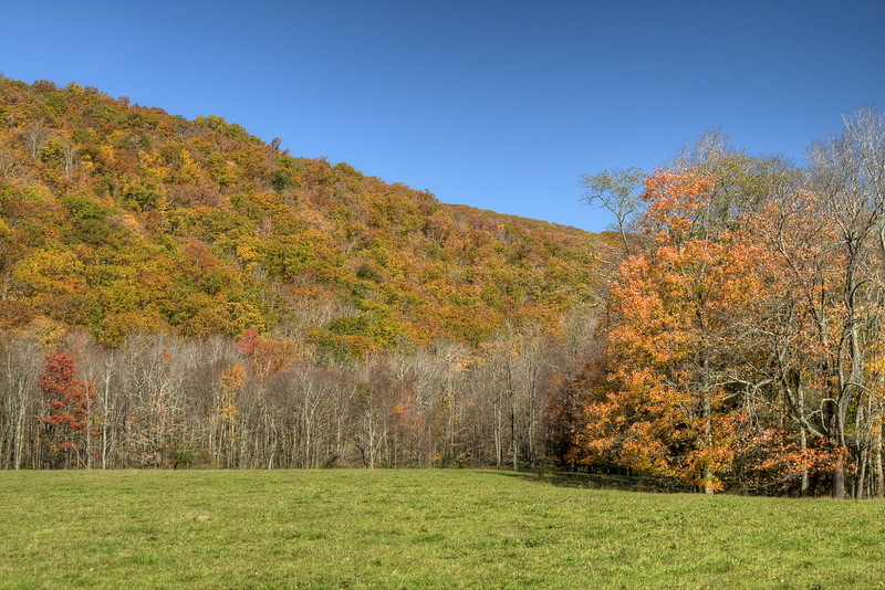Beautiful fall colors contrasted against vibrant green grass along Laurel Valley Road in Troutdale, VA on Sunday, October 19, 2014. Copyright 2014 Jason Barnette