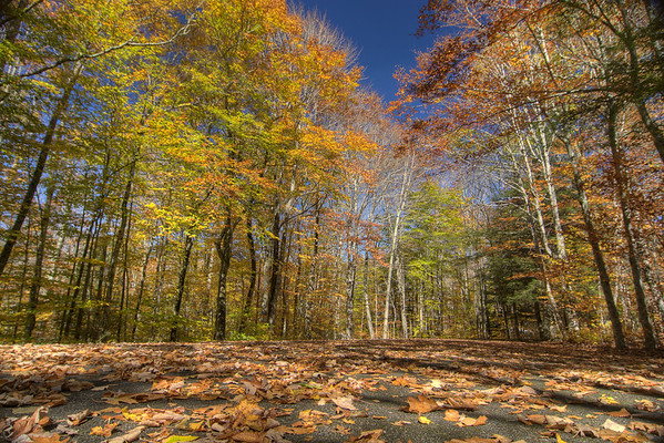 Leaves cover the ground beneath brilliant fall colors at Grindstone Campground in Troutdale, VA on Sunday, October 19, 2014. Copyright 2014 Jason Barnette