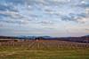 Afton Mountain vines - 2016-11-25