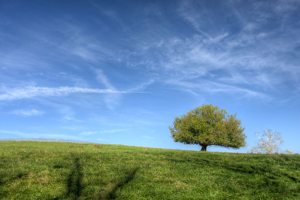 A lone green tree stands on a hill in Abingdon, VA on Monday, October 27, 2014. Copyright 2014 Jason Barnette