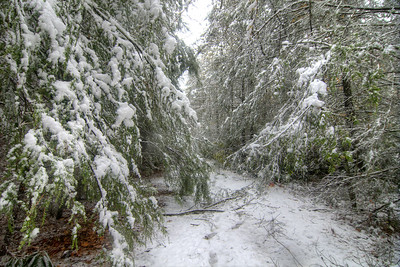 Heavy snow weighs down tree limbs, obscuring most of the Virginia Creeper Trail in Damascus, VA on Saturday, November 1, 2014. Copyright 2014 Jason Barnette