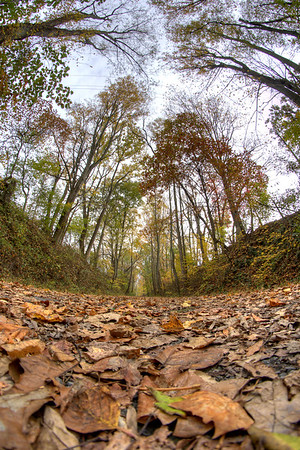 Leaves cover the ground on the Virginia Creeper Trail in Abingdon, VA on Friday, October 24, 2014. Copyright 2014 Jason Barnette