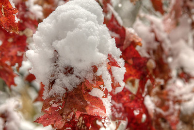 Heavy snow covers brilliant red leaves on the Virginia Creeper Trail in Damascus, VA on Saturday, November 1, 2014. Copyright 2014 Jason Barnette