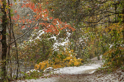 A few colors peak out around a snow covered Virginia Creeper Trail in Damascus, VA on Saturday, November 1, 2014. Copyright 2014 Jason Barnette