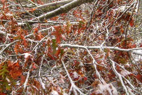 Brilliant red fall leaves are surrounded by heavy snow on the Virginia Creeper Trail in Damascus, VA on Saturday, November 1, 2014. Copyright 2014 Jason Barnette