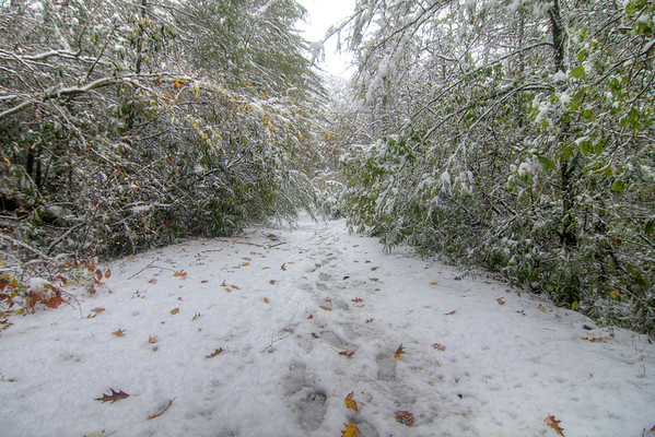 Fresh snow covers the ground and weighs down the tree limbs along the Virginia Creeper Trail in Damascus, VA on Saturday, November 1, 2014. Copyright 2014 Jason Barnette