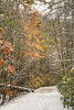 A few fall colors peak out from behind snow covered trees along the Virginia Creeper Trail in Damascus, VA on Saturday, November 1, 2014. Copyright 2014 Jason Barnette