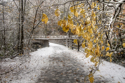 A splash of yellow leaves contrasts the snow covering the landscape at Trestle #20 on the Virginia Creeper Trail in Damascus, VA on Saturday, November 1, 2014. Copyright 2014 Jason Barnette