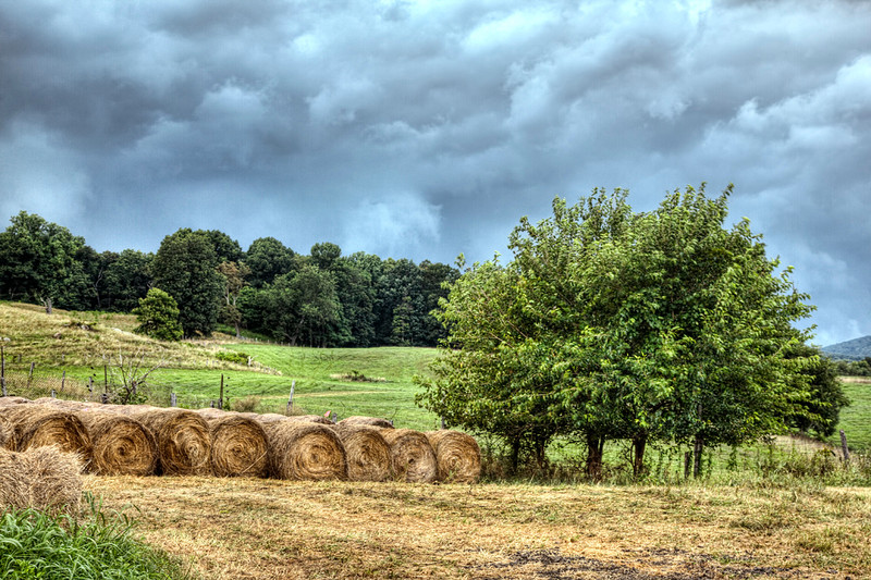Hay Rolls in the Country