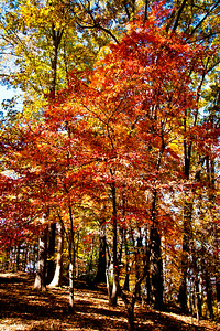 Fairy Stone State Park, VA