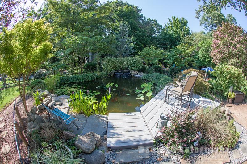 Backyard Koi Pond!