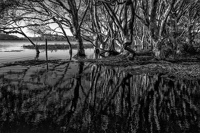 Lake Ainsworth Mono
