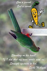 Parrot Eat A Carrot