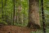 2015-07 Joyce Kilmer Mem Nat Forest 2