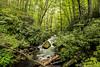 2015-07 Joyce Kilmer Mem Nat Forest 1