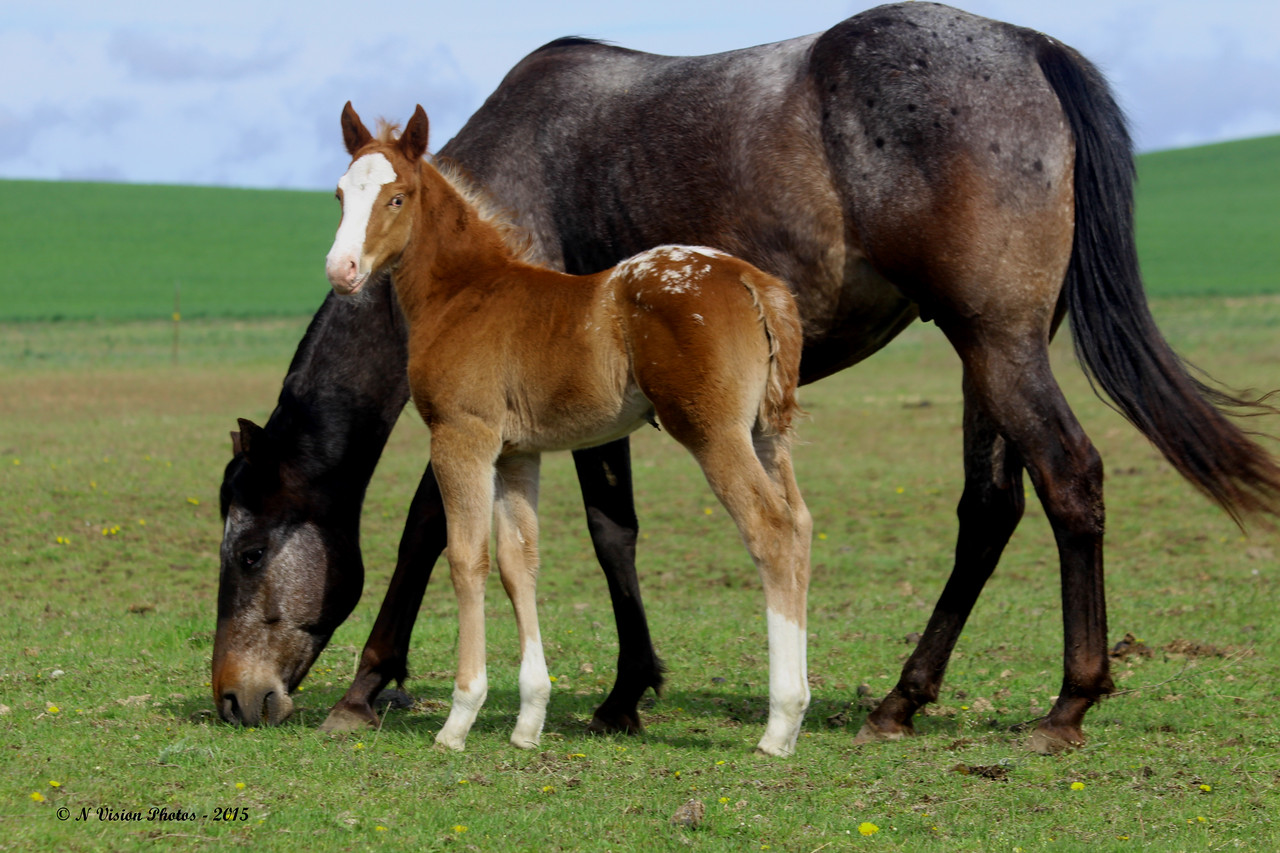 Beauty with 2015 Filly