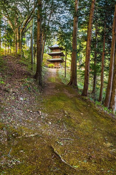 Track along the Cedar Forest Teisho-ji Buddhist Temple