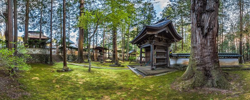 Millennial Cedar at Teisho-ji Buddhist Temple