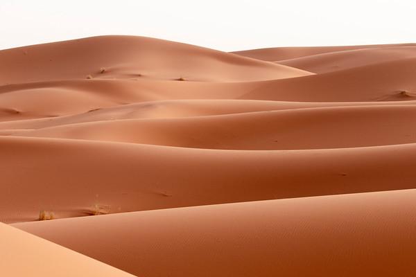 desertic quiescence
