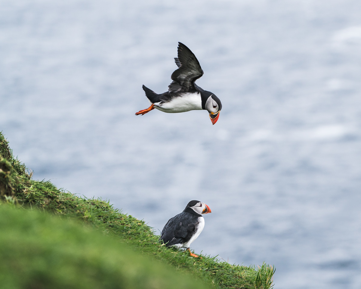Puffin Pals