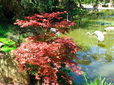 The pond in the Japanese Garden  http://www.lotusland.org/gardens/japanese.htm