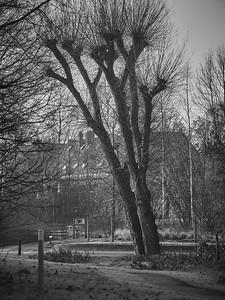 Promenade nature à Wezembek-Oppem - 14 janvier 2018