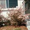 04/2003 Jen's tea tree