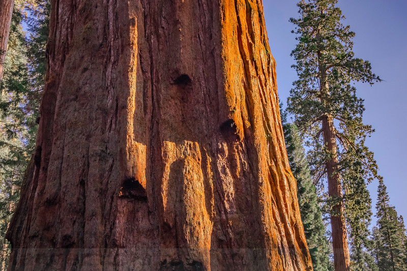 The General Sherman Tree and the Giant Forest