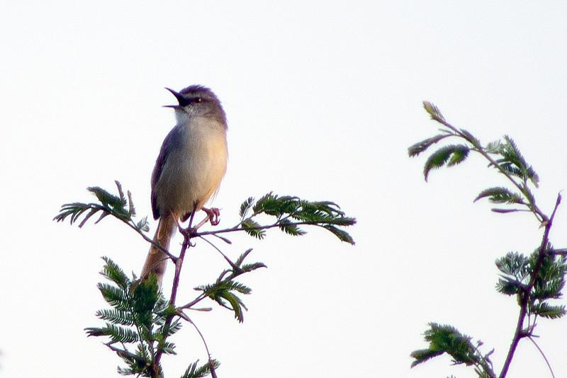 Birds - Plot 19