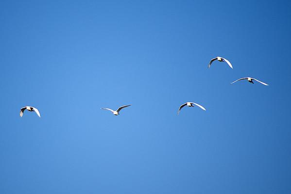 A Week of Just Birds (103 Photographs)