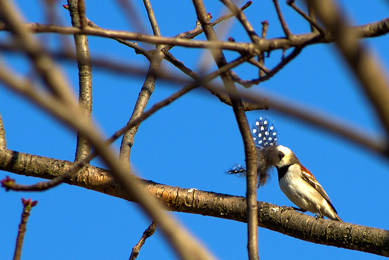 Birds at Sunrise