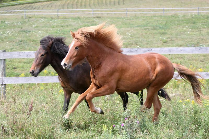 Kvistur and Freyja