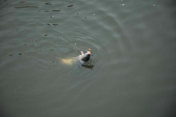 2006-12-23 Alwin vissen