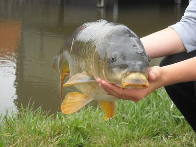2008-07-09 vissen aan de Bovendijk