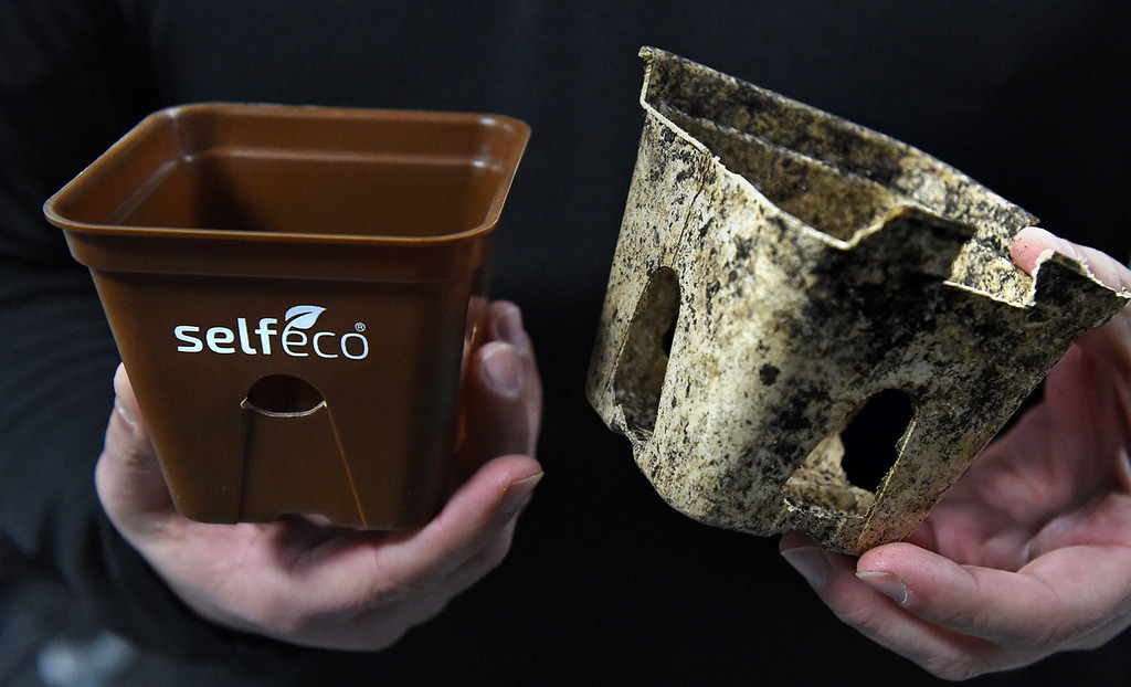 . Mishek holds a new SelfEco pot, left, and a SelfEco pot pulled out of the ground after four weeks, showing the breakdown of material.  (Pioneer Press: Jean Pieri)
